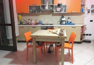 Gatti e pipì – Tutti i segreti di una casa pulita in presenza di gatti