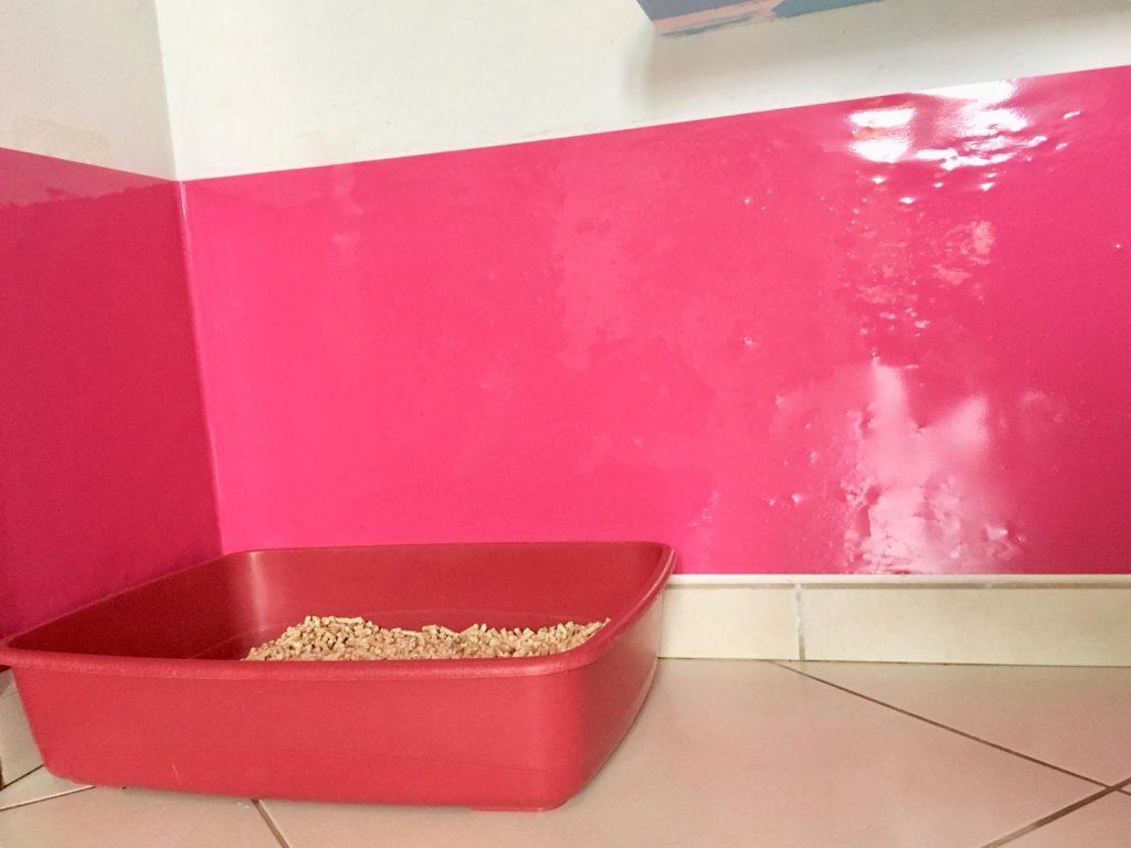 pulizia casa pipì gatti 13