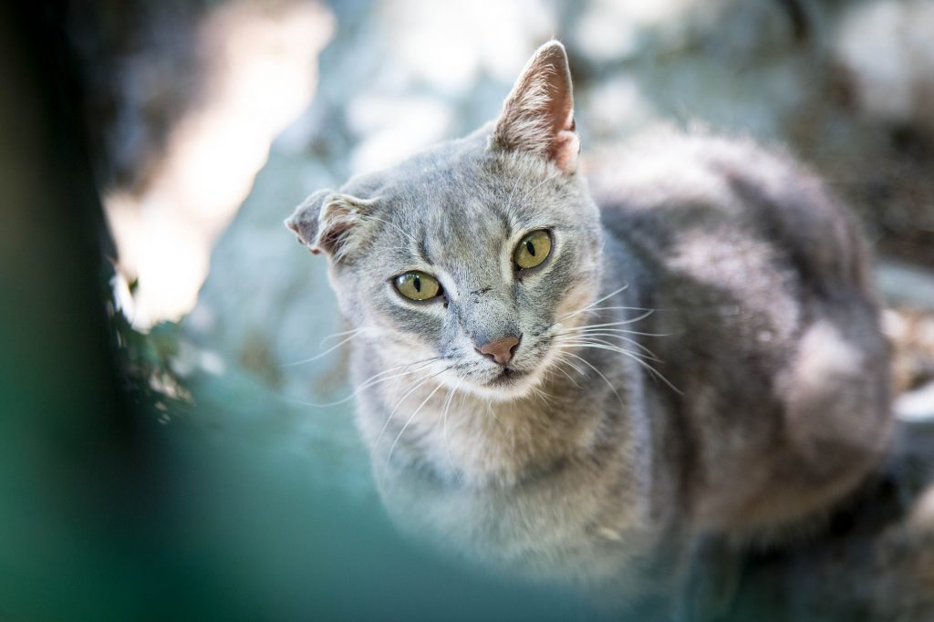 stronghold gatti