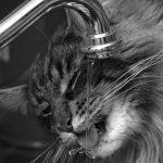 fontanella per gatti (2)