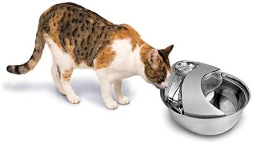 fontanella per gatti pioneer