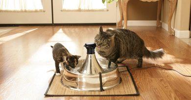 fontanella per gatti PetSafe Drinkwell