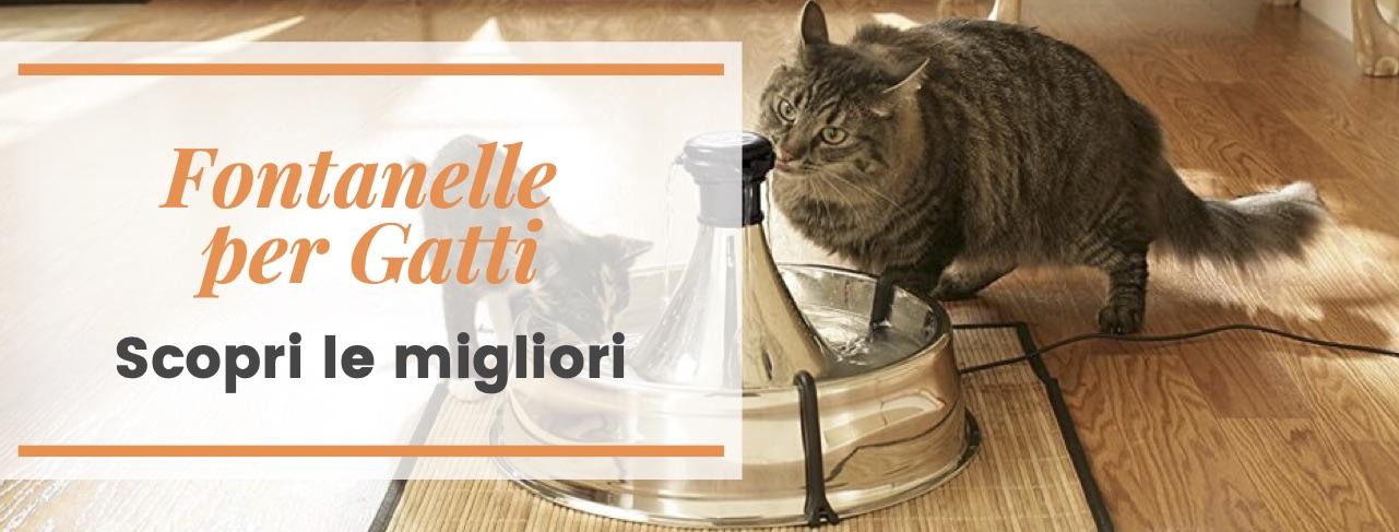 migliori fontanelle per gatto