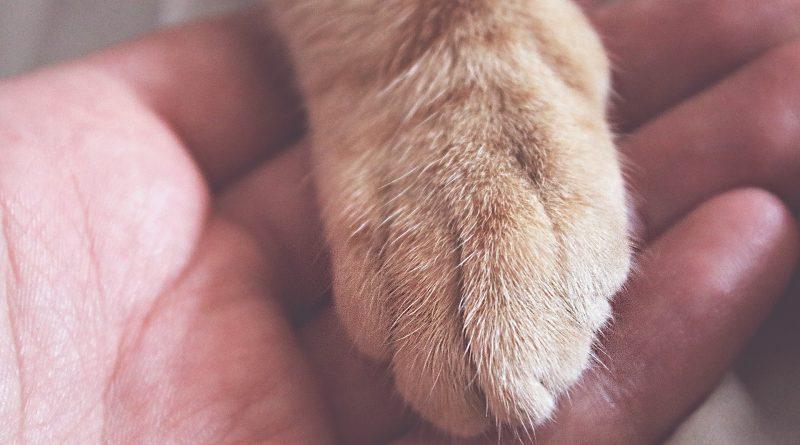 morte animale domestico