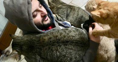 togliere peli di gatto dai vestiti