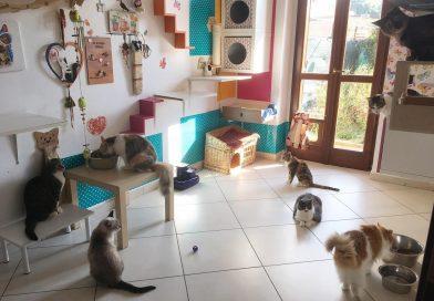 Gatti e pipì – Tutti i segreti di una casa pulita in presenza di gatti piscioni