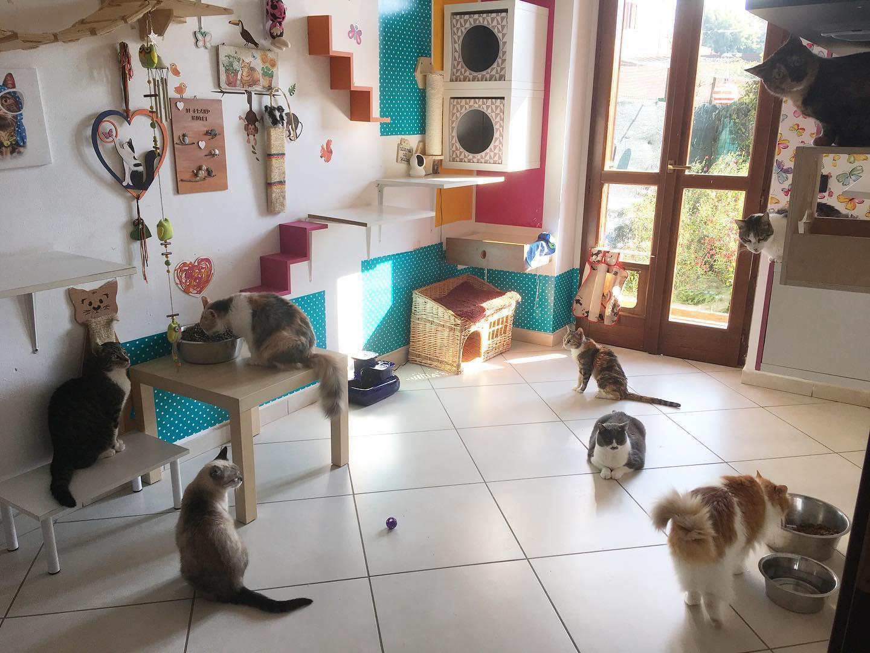 gatti pipì pulizia casa