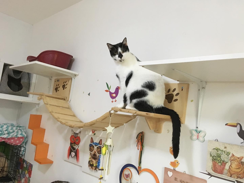 arricchimento ambientale percorsi gatti 2