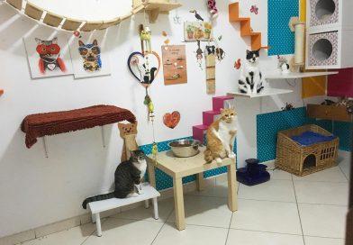 Una casa a misura di gatto: l'importanza dell'arricchimento ambientale