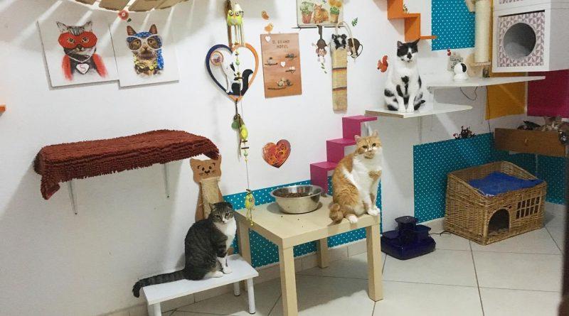 arricchimento ambientale percorsi gatti 3