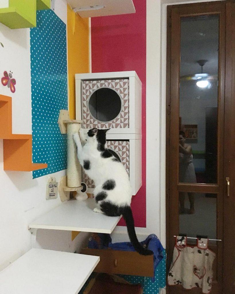 arricchimento ambientale percorsi gatti 4