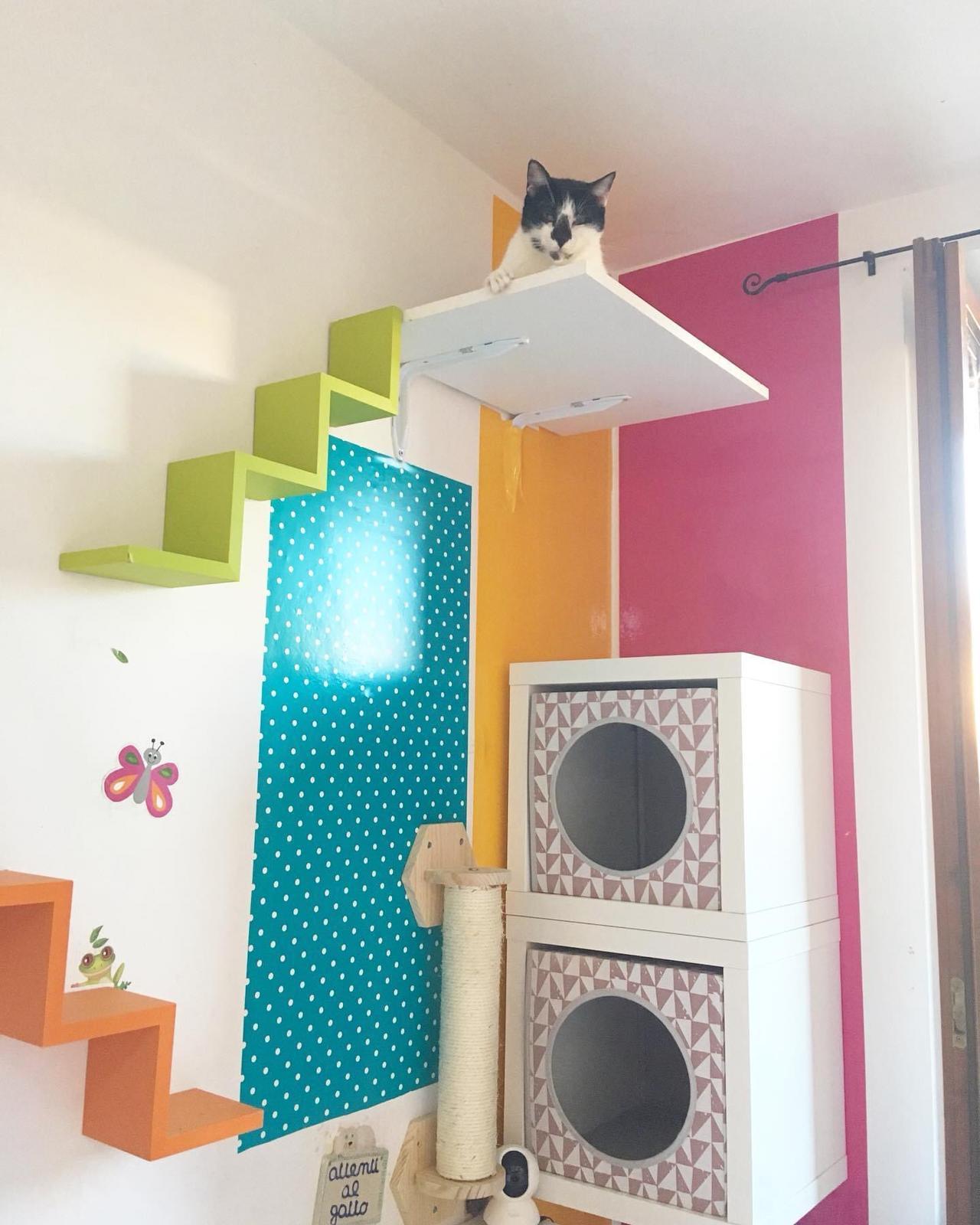 arricchimento ambientale percorsi gatti 5