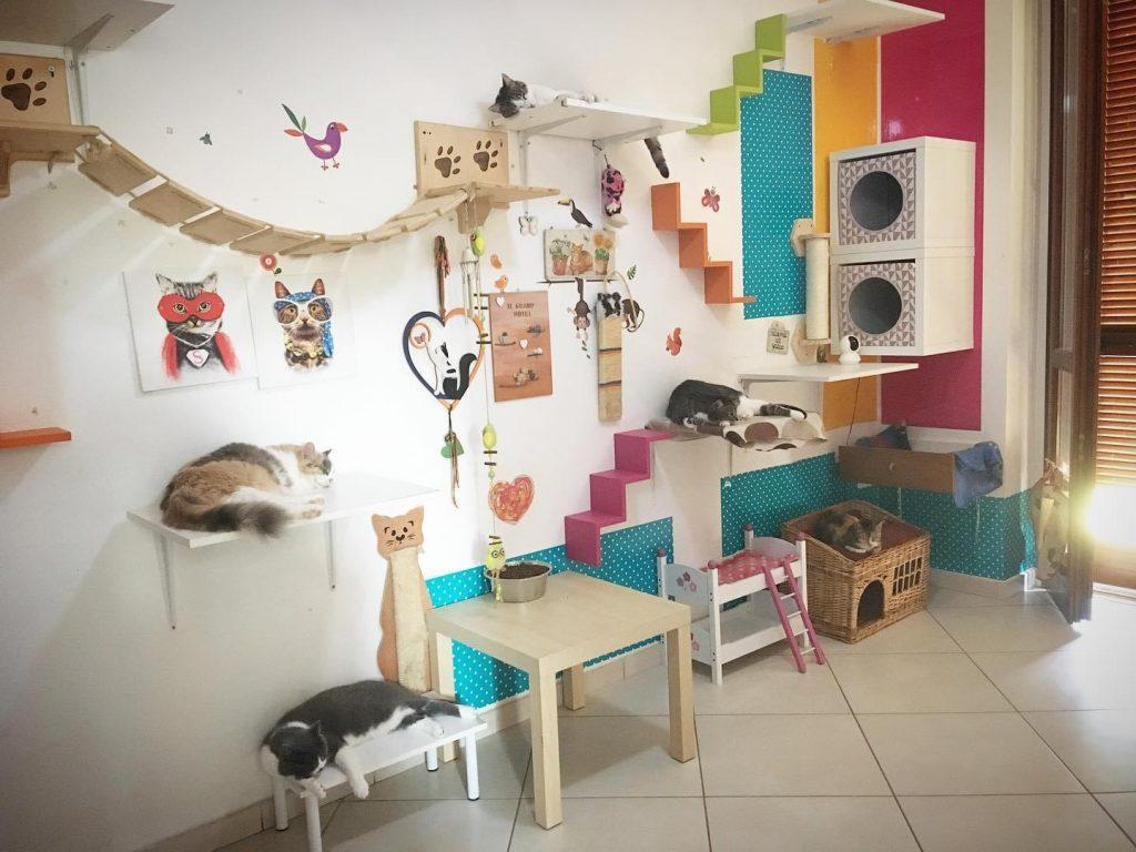 arricchimento ambientale percorsi gatti 8