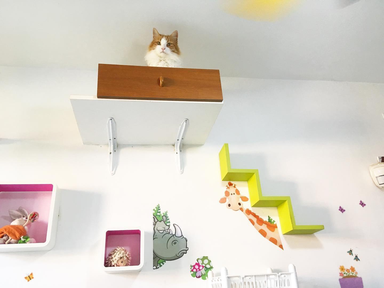 arricchimento ambientale percorsi gatti 9