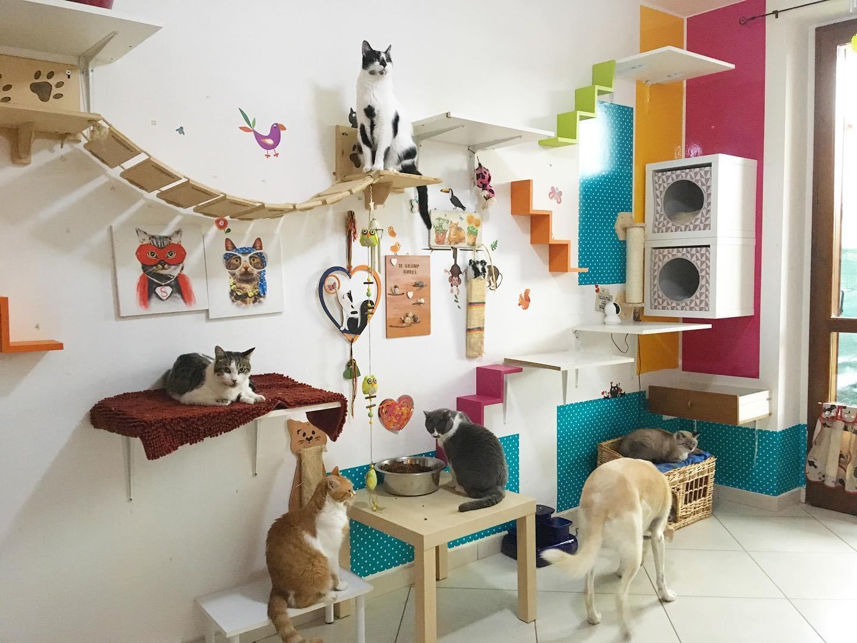 arricchimento ambientale percorsi gatti